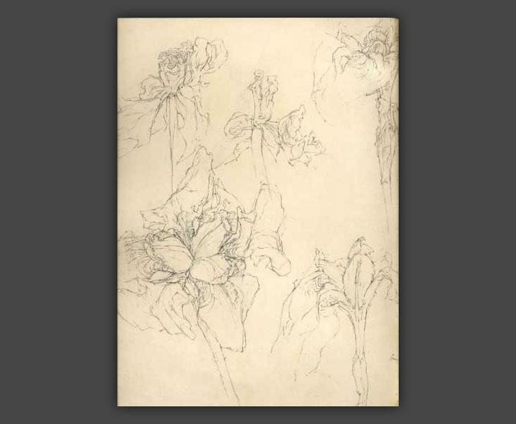 Studies of Iris  [1967]