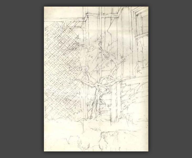 Studies of Suburban Front Garden  [1967]