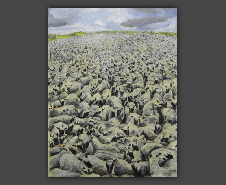Sheep   2013